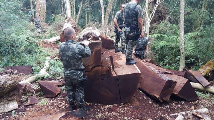 Divulgação / Polícia Militar Ambiental
