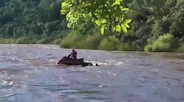 Bombeiros resgatam bovino no Rio Uruguai em Itapiranga